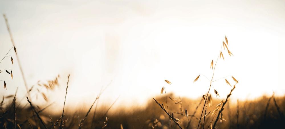 ett soligt fält